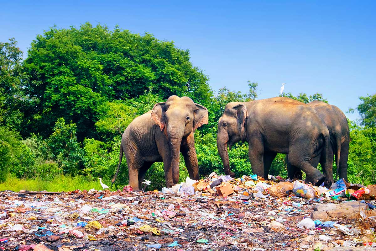 Elephants surrounded by plastic pollution
